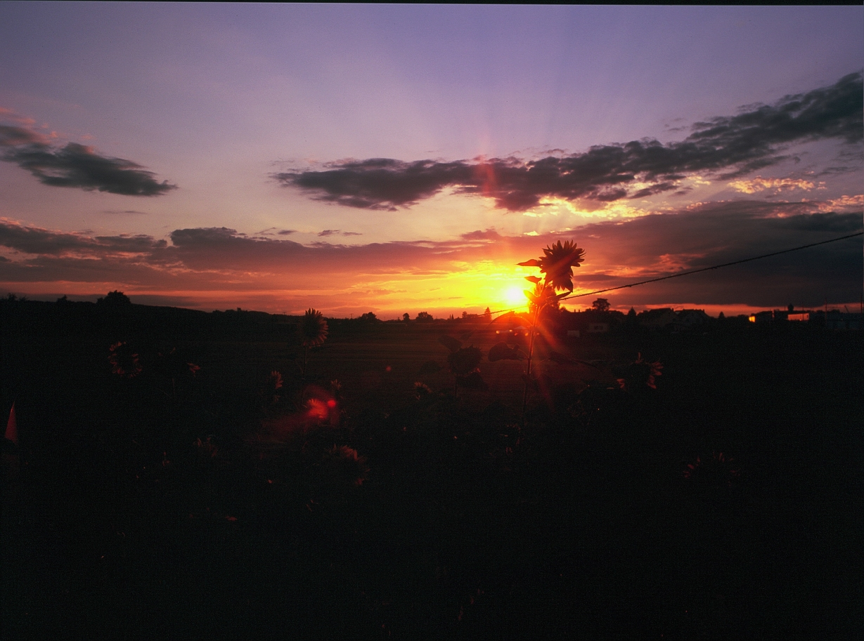 On the very first evening, the countryside welcomed us with this enormous expanse of fire tinted sky. (F) Fuji Velvia